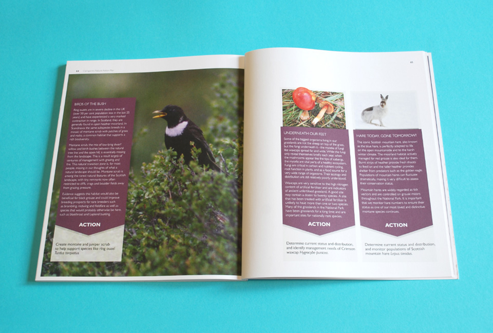 Spread design with beautiful photography and bright spaces for text